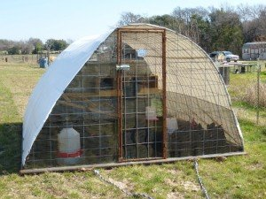 10 X 10 Cattle Panel Hoop Coops Claborn Farms