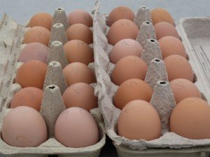 eggs from our best egg laying hens