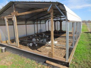 Update On Portable Chicken Coop Designs Claborn Farms