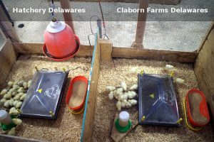 Side by Side Case Study with Delawares