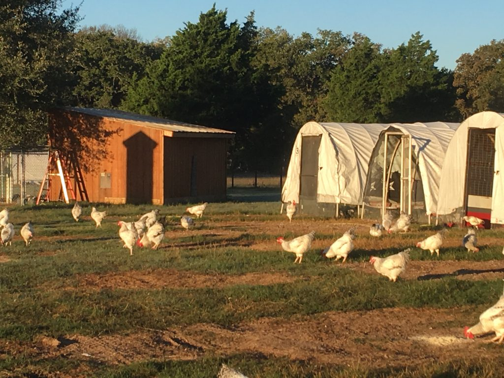 Portable Chicken Houses